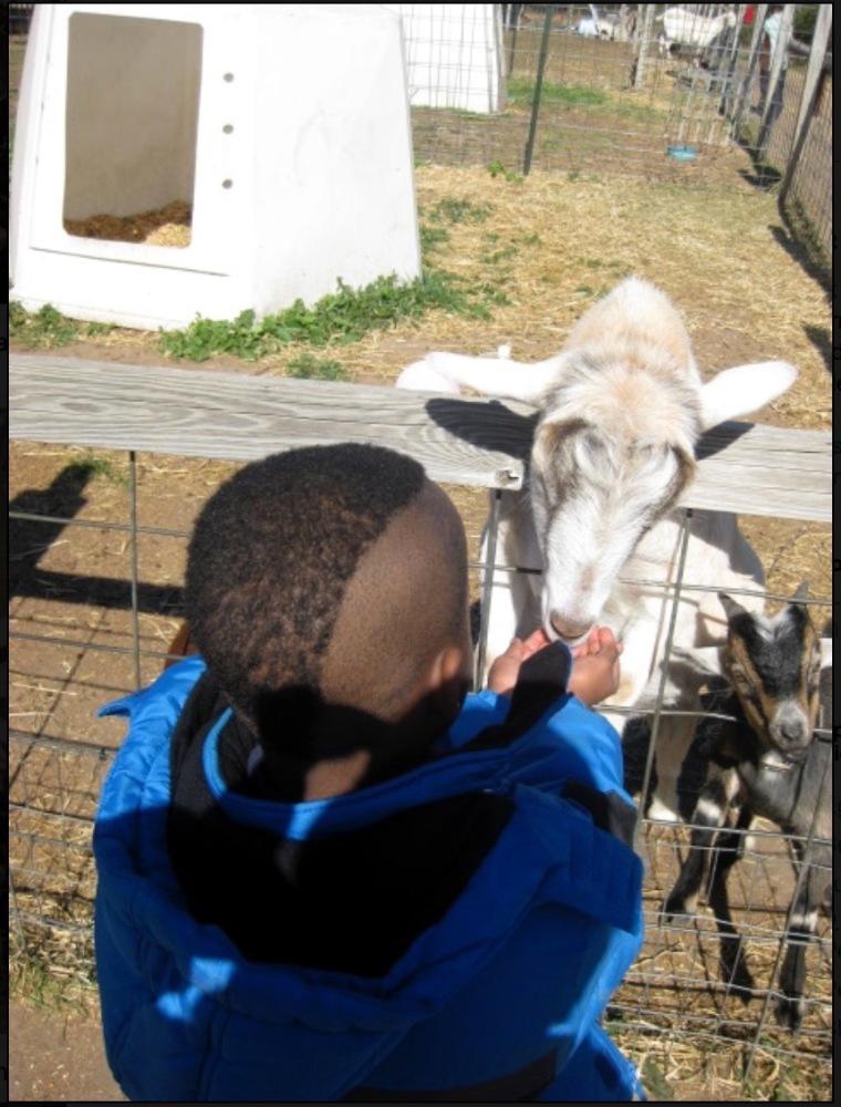 N&F--Goat